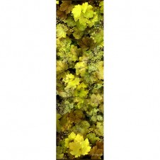 GREEN GOLD HEUCHERA