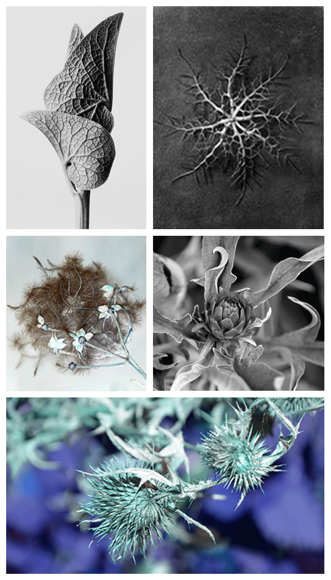 Images of inspiration for Pricklehead Blue Silk Scarf Design